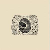 COIL - PORTO [RE-RELEASE] CD